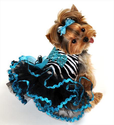 Diva Zebra Dress