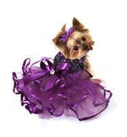 Purple Reign Tutu