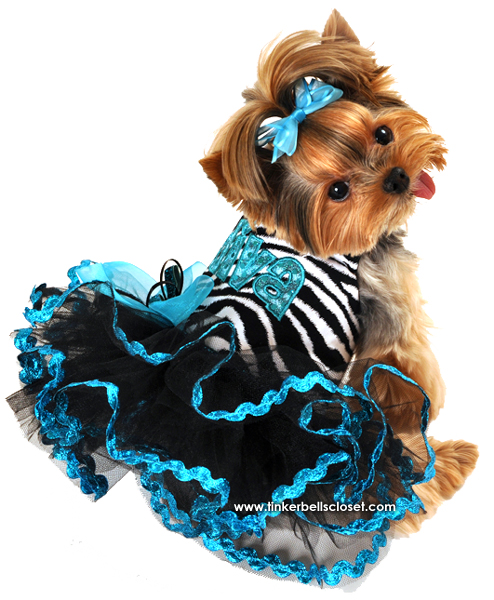 Diva Dog Dress Jpg 494 215 600 Dogs Design Clothing